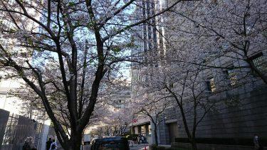 お花見 ~日本橋・江戸桜通り~